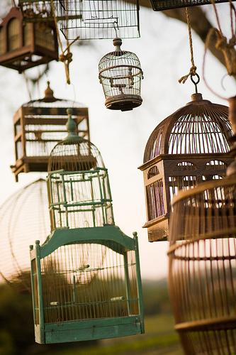 Birdcages 1